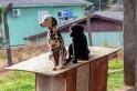 Foto: animais que desapareceram