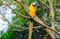 Foto da ave