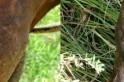 Mormo, animais tem que ser sacrificados. Foto; Porto Amazonas