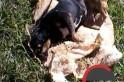 """Animal morto foi """"desovado"""" proximo a residencias. Foto: www.campeore.com"""