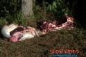 Animais são furtados e abatidos clandistinamente. Foto: www.campoere.com