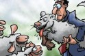 Cachorro comedor de ovelha...