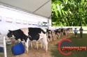 Saltinho realiza seminário de noz pecan e bovinocultura de leite