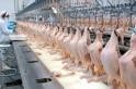 Você sabe quantos animais são abatidos por segundo no mundo?