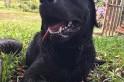 Em busca a pessoa desaparecida, cão do corpo de bombeiros morre afogado